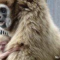 「ブームが終わった」旭山動物園は、大丈夫なのだろうか?