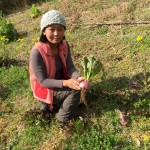 【農業ブログ第八回】生産者の取材をしました。「によどの恵み畑」を紹介します。