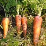 【農業ブログ第11回】 農家の支援を行っているメンバーを、ご紹介します!