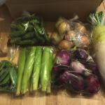 【農業ブログ第17回】規格外野菜を購入していただける方を10組募集いたします。