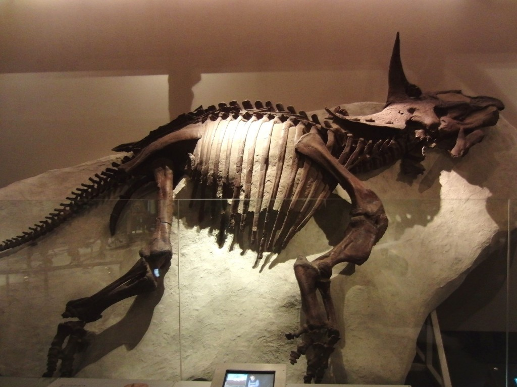 Triceratops_Raymond_National_Museum_of_Nature_and_Science