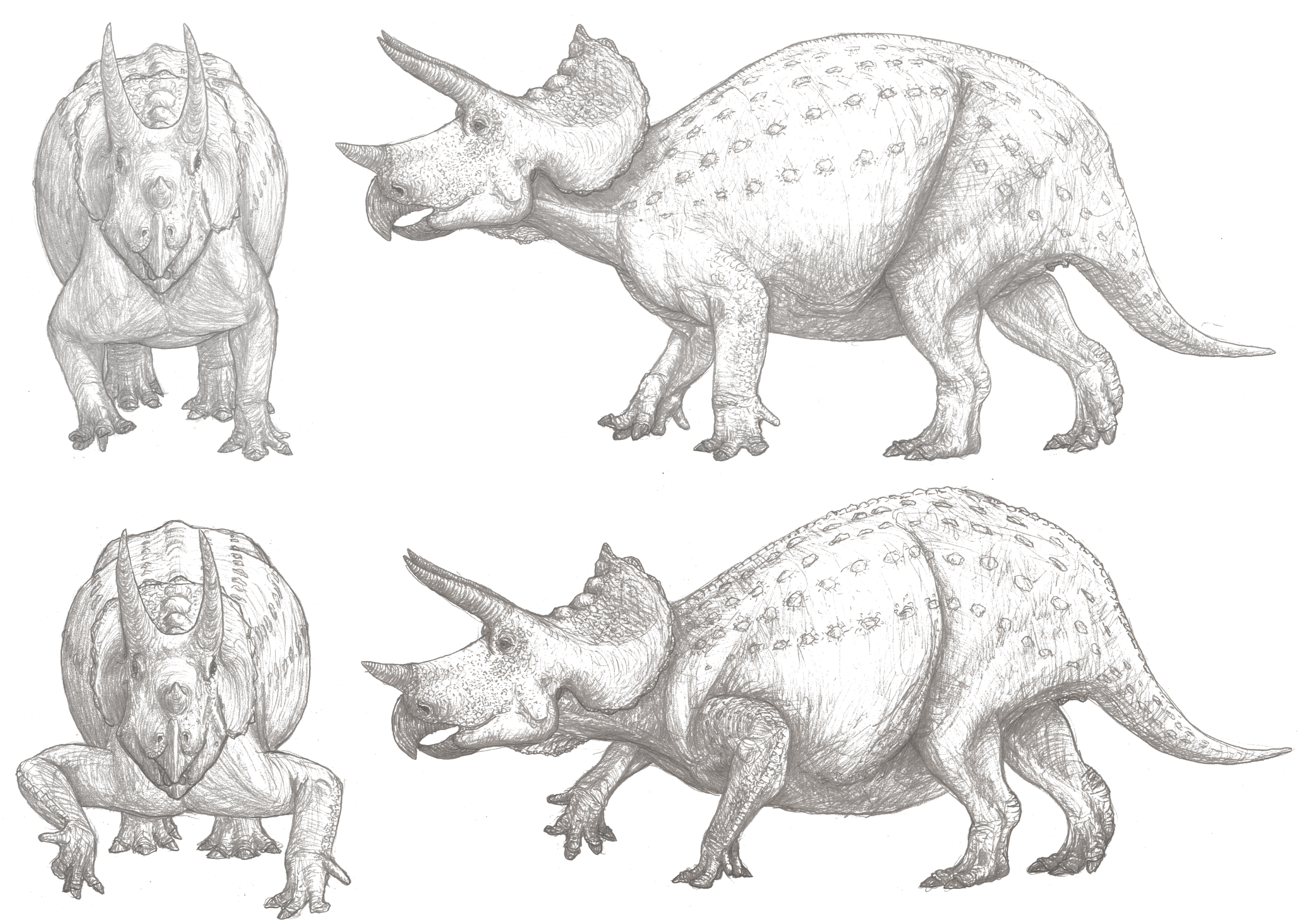 Triceratops_SIF